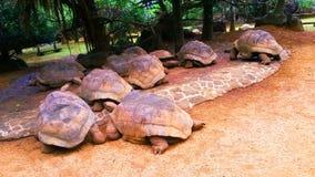 Черепаха, черепахи Стоковое фото RF