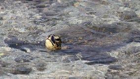черепаха 02 Стоковое Изображение RF
