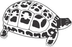 черепаха Стоковая Фотография RF