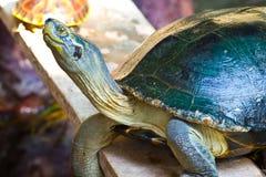 черепаха Стоковое фото RF