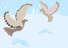 черепаха 2 12 голубей Рождеств Стоковое Фото