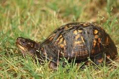 черепаха стоковые фотографии rf