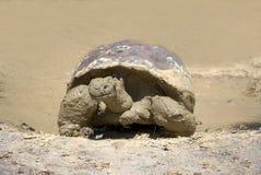 черепаха galapagos гигантская Стоковые Фото