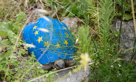 Черепаха Kruje известная, красила флаг соединения евро на своей раковине Стоковая Фотография RF