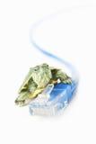 черепаха lan кабеля Стоковые Изображения