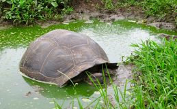 Черепаха pagos ¡ Galà Стоковое фото RF