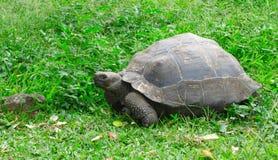 Черепаха pagos ¡ Galà Стоковые Изображения