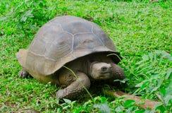 Черепаха pagos ¡ Galà Стоковое Изображение RF