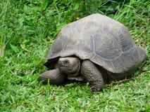 Черепаха pagos ¡ Galà Стоковые Фотографии RF