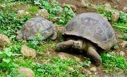 Черепаха pagos ¡ Galà Стоковое Изображение