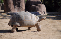Черепаха pagos ¡ GalÃÂ стоковые изображения rf