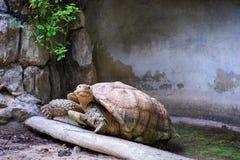 Черепахи вползают вверх по холму стоковая фотография