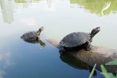 Черепахи в городе стоковые изображения rf