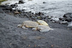 Черепахи в песке Стоковое Фото