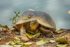 Черепахи загорают стоковые изображения