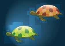черепахи зеркала Стоковые Изображения RF