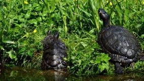 Черепахи лежа на траве Группа в составе красно-ушастые elegans scripta Trachemys слайдера видеоматериал