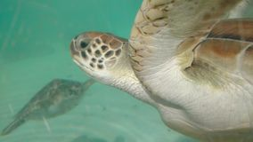 Черепахи Мексика морской жизни стоковые фотографии rf