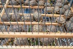 Черепахи младенца для продажи в деревенской клетке с растительностью Medina Marrakech, Марокко стоковое изображение