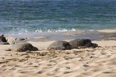 черепахи моря Стоковые Фотографии RF