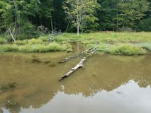 Черепахи на воде имени пользователя в области заболоченного места или болота стоковое изображение