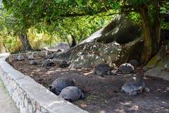 Черепахи отдыхая в парке стоковое изображение rf