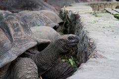 Черепахи Сейшельские островы стоковое изображение