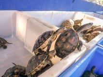 3 черепахи сломали из тюрьмы стоковые фотографии rf