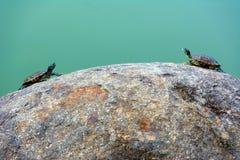 черепахи 2 Стоковое фото RF