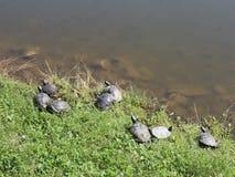 черепахи видеоматериал