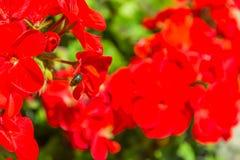 Черепашка в красном цвете Стоковое Фото