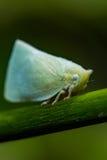 Черепашка листьев Стоковая Фотография RF