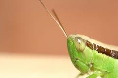 Черепашка и малое насекомое Стоковое Фото