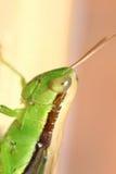 Черепашка и малое насекомое Стоковые Фотографии RF