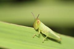 Черепашка и малое насекомое Стоковое Изображение RF