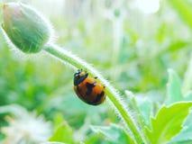Черепашка и цветок Стоковое Фото