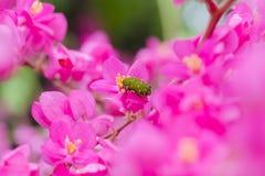 Черепашка и цветок Стоковые Изображения RF