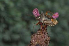 Черепашка леса Стоковые Фото