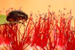черепашка малая Стоковое Изображение RF