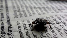Черепашка на бумаге Стоковое Фото