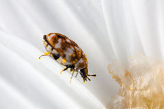 Черепашка на лепестках стоковое изображение