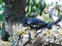 Черепашка на дереве Стоковая Фотография