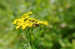 Черепашка на желтых цветках стоковое фото rf