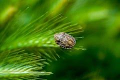 Черепашка на Зерн-ухе Стоковая Фотография RF