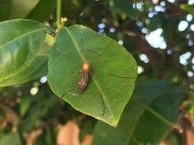 Черепашка на листьях Стоковое фото RF