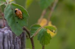 Черепашка на листьях Стоковое Фото