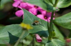 Черепашка на листьях Стоковая Фотография RF
