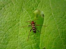 Черепашка на лист Стоковые Изображения RF