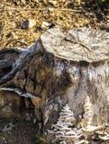 Черепашка на пне Стоковые Изображения RF