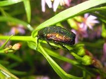 Черепашка на цветах Стоковое Изображение RF
